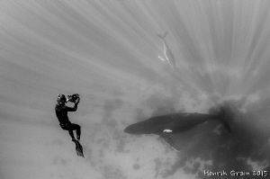 Humpback and Photographer by Henrik Gram Rasmussen